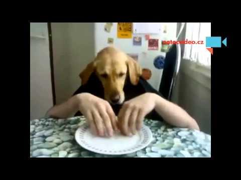 Pes clovek