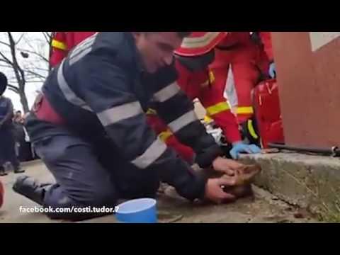 Vídeo - Bombeiro faz respiração boca a boca e tenta salvar vida de cão após incêndio