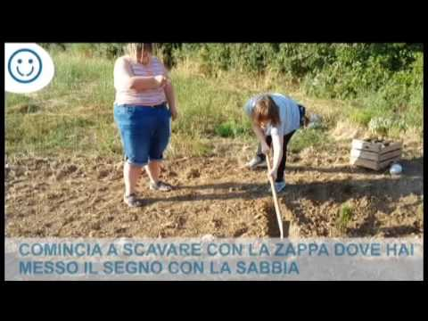 Watch video Le pianti officinali