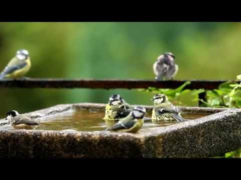 Badderende vogeltjes