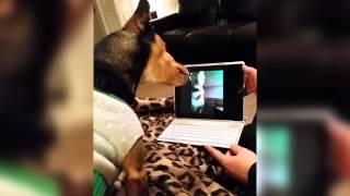 animale cainii pe skype