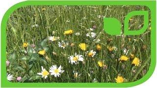 #1194 Pflege einer Wildblumenwiese
