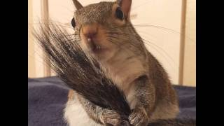 Squirrel Rescued After Hurricane Becomes Family'S Cutest Member Jill, a lovely squirrel in Louisiana that was rescued after,More infohttp://www.boredpanda.co...