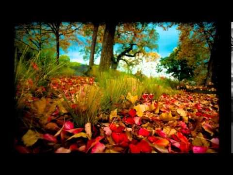 красивая природа египта (видео)