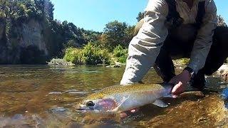 Turangi New Zealand  City new picture : Fly Fishing New Zealand - Sight Fishing the Tauranga-Taupo River