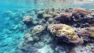 GoPro: Snorkeling / Free Diving - Solomon Islands. SWIMMING WITH SHARKS!!! Clear blue water. diving off Uepi Island in the...