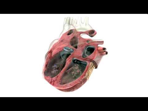 comment prendre fréquence cardiaque au repos
