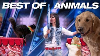 Video Singing Dogs! Cat Tricks! Animal Noises From A Human! - America's Got Talent 2018 MP3, 3GP, MP4, WEBM, AVI, FLV Januari 2019