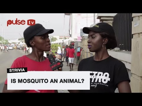 Is Mosquito A Wild Or Domestic 'Animal' | Pusle TV Strivia
