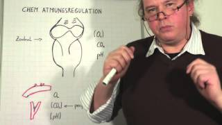 In diesem Video erklären wir die unterschiedliche Messgrössen von peripheren und zentralen Rezeptoren, welche die Atmung steuern. Viel Spass
