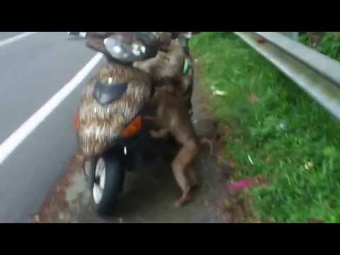Video Feeding the poor monkey ..SUPPORT ME download in MP3, 3GP, MP4, WEBM, AVI, FLV January 2017