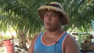 Yellow crazy ants have invaded Tokelau