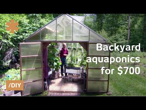 Greenhouse aquaponics: DIY system to farm fish with vegetables