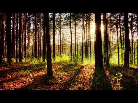 1 Hour Meditation Music: Yoga Music, Calming Soft Instrumental Music ☯062