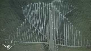 Хищная губка Chondrocladia lyra