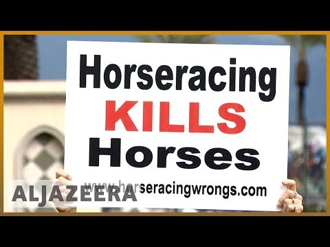 🇺🇸 Mysterious deaths of 21 horses in US over last two months probed | Al Jazeera English
