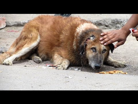Rescue of an injured street dog – beautiful recovery