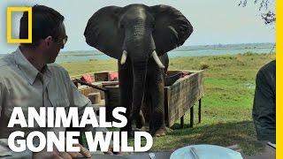 Nonton Elephant Party Crasher | Animals Gone Wild Film Subtitle Indonesia Streaming Movie Download