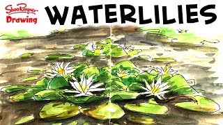 Join me as I do a quick sketch of waterlilies on, what I call, the lost pond. We've found it now so it isn't lost anymore! Water lily leaves are basically circular so, to draw them from a side view, they need to be ellipses but all set on the same plane.I didn't have very long to do this, about half an hour with set up time. The video has only about 30 seconds edited from it. I drivel on a bit, but I hope some of my chat is useful. Otherwise it's a nice, peaceful, sunny afternoon by the pond.You can get a hi res scan to download on my Patreon page here and also watch it advert free! https://www.patreon.com/posts/13094908#waterlilies #sketching #sketchbookWith award winning illustrator, Shoo RaynerYou can support my videos on Patreon ➡️ http://bit.ly/ShooPatreonPageSubscribe for lots more drawing :) ➡️ http://bit.ly/Sub2ShooEveryone asks about the tools I use when I'm out using my sketchbook. here's a video to show you what and how I use them. https://youtu.be/QJwjV1FKdygThe Pentel Aquash Brush is here in the Uk http://bit.ly/PentelAquabrushUKand here in the US   http://bit.ly/PentelAquashBrushUSARotring Tikky Graphic in the UK here http://bit.ly/TikkyGraphicUKin the USA http://bit.ly/TikkyGraphicUSThe Cotman sketching watercolour set is here in the UK http://amzn.to/1gNpZ8sand in the US here: http://amzn.to/1gaG6qAThe Seawhite of Brighton a5 travel journal is here in the Uk http://bit.ly/SeawhiteJournalUK and here in the USA http://bit.ly/SeawhiteA5JournalUSATwitter http://twitter.com/shooraynerGoogle+ https://plus.google.com/u/0/117947137150973770218Facebook http://www.facebook.com/profile.php?id=750207845Website http://www.shooraynerdrawing.commusic by http://www.youtube.com/cleffernotesShoo Rayner is an award-winning illustrator and author of over 200 books for children. The Shoo Rayner Drawing Channel won the 2011 YouTube NextUp award and is dedicated to teaching, promoting and inspiring drawing for everyone from beginners to experts who like to see how other pe