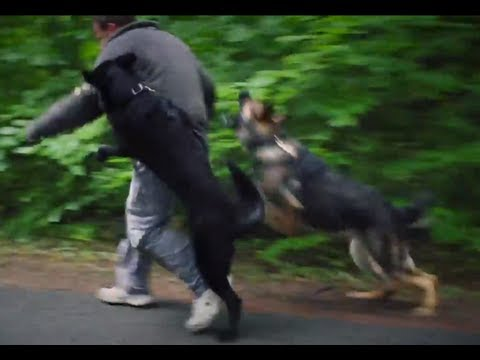 Protection - This compilation of training scenario shows why two personal protection dogs are better than one—as long as they have the right training. From obedience to h...