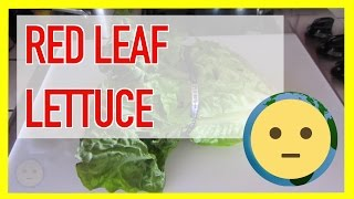 A featurette on red leaf lettuce with health benefits, nutrition facts / values + calories information as well as other popular types of lettuce often found in grocery stores (and some that aren't so popular).Calories in red leaf lettuce - approx. 50 calories per 1 head of lettuce.How many carbs in lettuce - 7g. per head of lettuce.Red leaf lettuce health benefits - a good source of Dietary Fiber, Calcium, Magnesium, Phosphorus and Selenium, and a very good source of Vitamin A, Vitamin C, Vitamin K, Thiamin, Riboflavin, Vitamin B6, Folate, Iron, Potassium and Manganese.Nutritional Value - Total Fat 0.7g, Sodium 77 mg, Potassium 578 mg, Total Carb 7g, Dietary fiber 2.8g, Sugar 1.5g, Protein 4.1g 8%, Vitamin A 463%, Vitamin C 19%, Calcium 10%, Iron 20%, Vitamin D 0%, Vitamin B-6 15%, Magnesium 9% Lettuce is popular as the main vegetable in salads.  You'll see the different types in sandwiches as well.  Healthy lettuce wrap recipes also feature this vegetable prominently as well as a delivery mechanism for other food / nutrients.  Red leaf lettuce is not the only type of lettuce.  There are other green leaf lettuce varieties vs the red lettuce seen here.  Other types of lettuce include iceberg, butter, bibb (boston, butterhead,limestone), mesclun, arugula, endive, little gem (COS) and others.  You can find most of these at your local grocery store.  If you're interested in growing lettuce, there are ample places to buy lettuce seeds and then find out the best conditions to grow / for planting them.  Some people ask is lettuce a vegetable?  Lactuca sativa is an annual plant of the daisy family Asteraceae and is widely grown as a leafy vegetable.  Is lettuce good for you?  Lettuce is very good for you and a good source of Vitamin A, K, and Manganese.For more videos on food, cooking, recipes, check out our Food & Drinks playlist at https://www.youtube.com/playlist?list=PLmL7JMU7aON_41zoKnHfK1VVTLNEd6Rwg.  There you'll find tasty to easy recipes as well as nutritional facts for all types of produce.  You'll also see videos highlighting different types of cuisine and dishes from ethnic to fast food.  This will be the food vLog portion of the channel.  There are many cooking channels on youtube, so hopefully you'll be able to experience cooking in a different more casual perspective and maybe some fun new marinades that you might not have considered or rare unique dishes from other cultures.  If you have any requests for food videos, let us know.For more info on food, check out our website at: http://www.MySuLonE.Com.Copyright 2016 MySulone.Com. All rights reserved. All other company, product and/or service names used in this video are solely for the purposes of identification. All trademarks are the property of their respective owners.