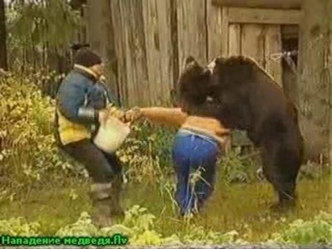 белый медведь нападает на человека видео
