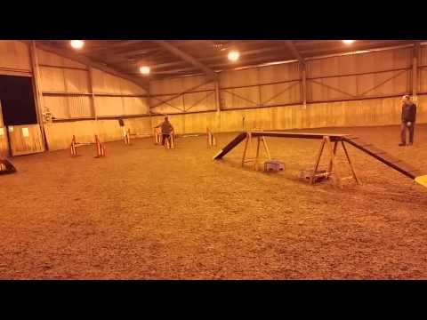 Sarah and Diva Training at Little Meadows Agility 25-11-2014