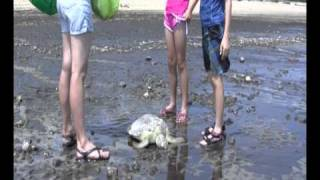 Tannum Sands Australia  City new picture : Turtle Rescue Tannum Sands Gladstone