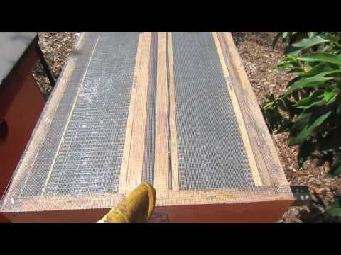 Preparing a Honey Bee Hive for Fall or Winter