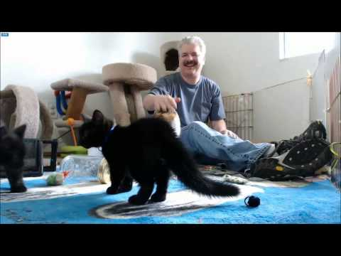 Man tries to pet cat, causes chain reaction of startled cats.