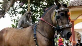 Video Actraksi Kuda Menari MP3, 3GP, MP4, WEBM, AVI, FLV April 2019