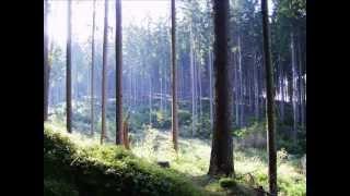 Download Lagu Forseti - Empfindsamkeit Mp3