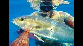 Amberjack 10 Kg - Spearfishing