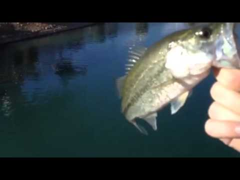 Bass fishing at my local pond