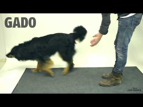 Dogs Reacting to Magic Tricks (Very Funny!)