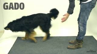 Taikuutta koirille - Magic for dogs - YouTube