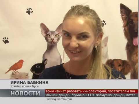 День кошек отметили в Хабаровске. Новости. 08/08/2018. GuberniaTV