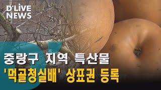 (중랑구)  중랑 특산물 '먹골청실배' 상표권 등록 딜라이브뉴스 방영 썸네일