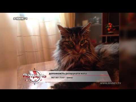 У Рівному власники шукають кота [ВІДЕО]