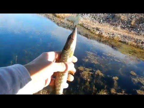 рыбалка на щуку дагестан