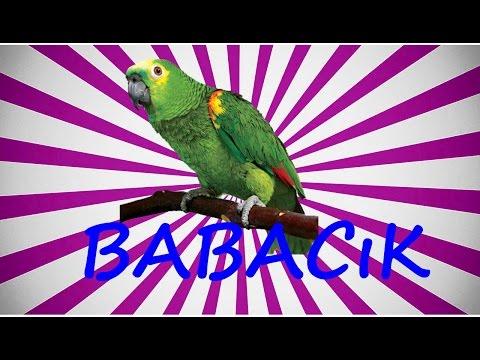 Video Muhabbet Kuşu ve Papağan Konuşturma BABACIK Sesi hazır ses kaydı 1 saat download in MP3, 3GP, MP4, WEBM, AVI, FLV January 2017