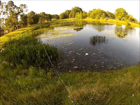 Worm & Frog- Bass Fishing