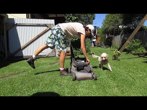 How To Stop Dog Lawn Mower Excitement