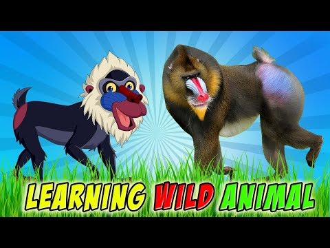 The Best Wild Animals || Learning Animal Sounds and Names for Toddler || Baby Learn and Fun