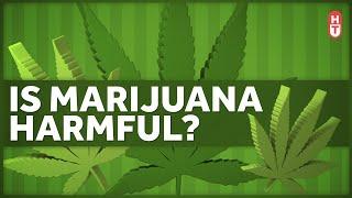 Is Marijuana Harmful to Health?