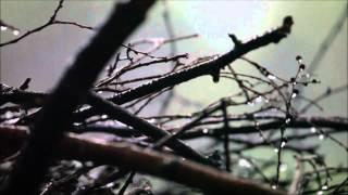 Qaraqan - Yağış