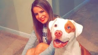 Woman Is Warning Pet Owners About This Dangerous Kitchen Item After Beloved Dog's Tragic Passing by Did You Know Animals?