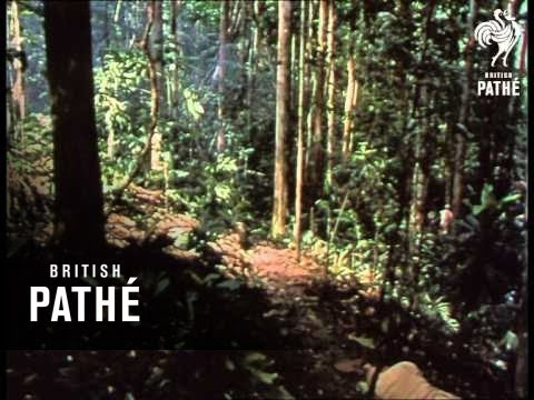 Ambush Reel 1 (1964)