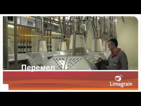 Зернові Limagrain