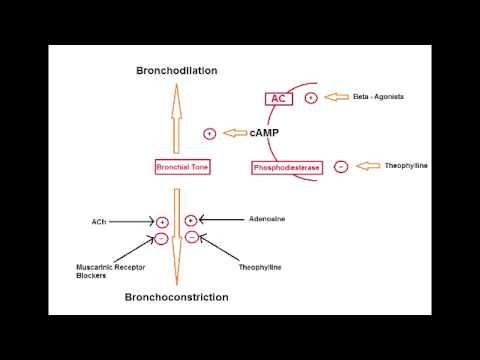 Asthma Drugs - B2 Agonists (Albuterol, salmeterol & formoterol)